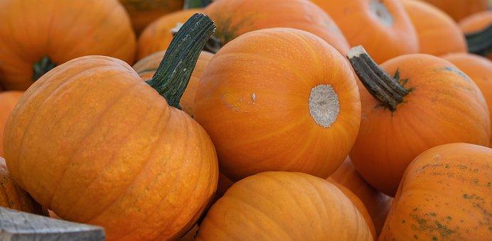 Squashes, Cucurbita Pepo, Pumpkins, Orange, Fruits