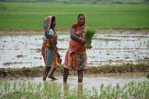 Two Women, Rice Transplanting, Odisha