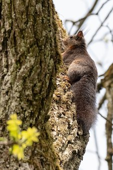 Squirrel, Tree, Climb, Rise, Animal World, Cute, Watch
