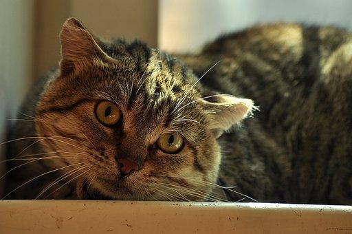 Cat Cute, Close, Watch, Eyes, View, Striped, Love, Yard