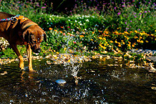 Dog, Water, Pet, Animal, Fun, Summer, Cute, Nature