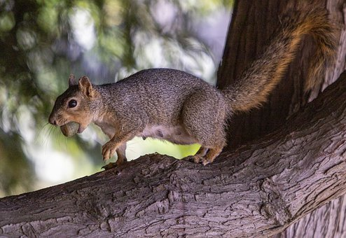 Squirrel, Tree, Animal, Nature, Cute, Branches