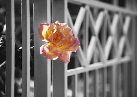 Flowers, Color, Jerusalem, Red, Orange, Blossom, Bloom