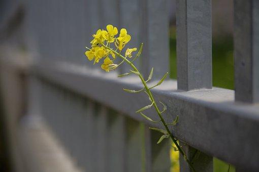 Flower, Color, Jerusalem, Blue, Yellow, Blossom, Bloom
