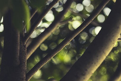 Branches, Tree, Green, Nature, Branch, Trunk