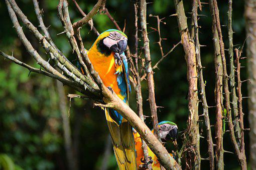 Parrot, Macaw, Bird, Colorful, Exotic, Jungle, Tropical