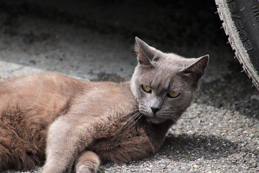 Cats, Felines, Gray Color, Pets, Cute, Adorable, Young