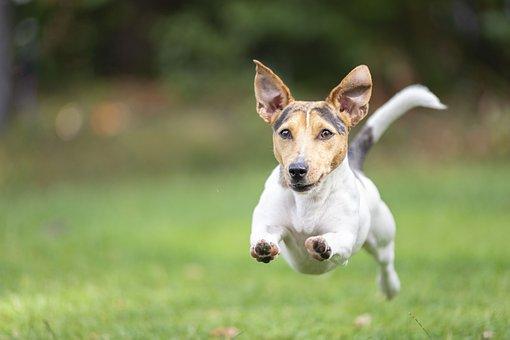 Dog, Racing, Play, Action