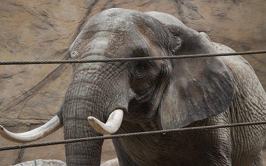 Elephant, Zoo, Animal, Nature, Mammal, Jungle, Wild