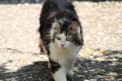 Cats, Felines, Pets, Cute, Adorable, Mammals