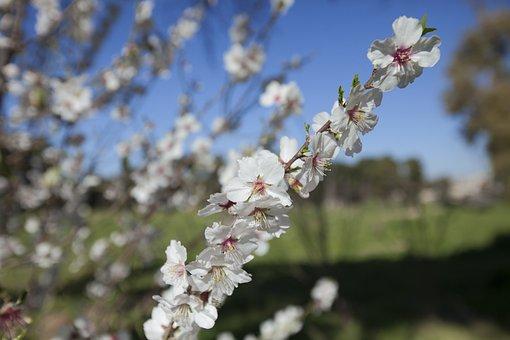 Flowers, Color, Jerusalem, Blue, White, Blossom, Bloom