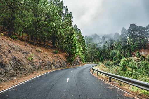 Road, Fog, Landscape, Forest, Tree, Autumn, Nature