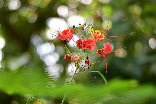 Nature, Green, Flower, Garden, Plants, Wallpapers