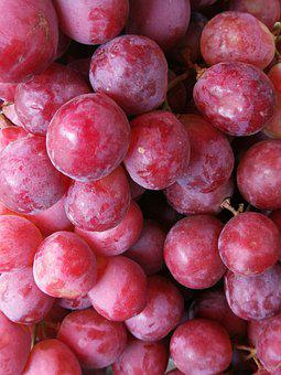 Grapes, Harvest, Viticulture, Wine, Vineyard, Fruit