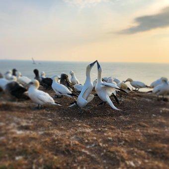 Helgoland, North Sea, Sea, Sea Island, Bird