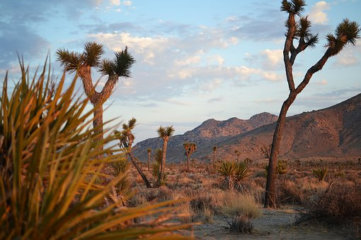 Joshua Tree, California, Desert, Landscape, Usa, Scenic