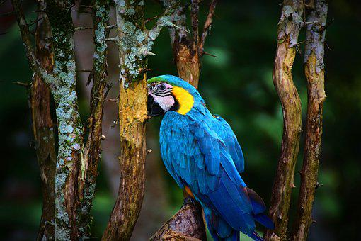 Macaw, Parrot, Bird, Colorful, Animal, Nature, Blue