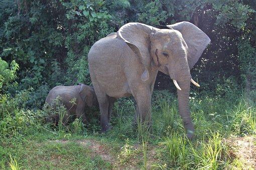 Mother, Elephant, Baby, Mammal, Elephants, Safari