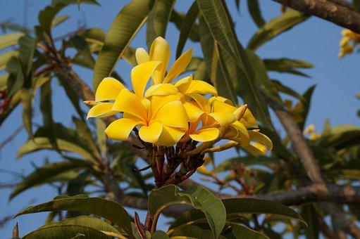 Flower, Plant, Flowers, Spring, Petals, Flora, Nature