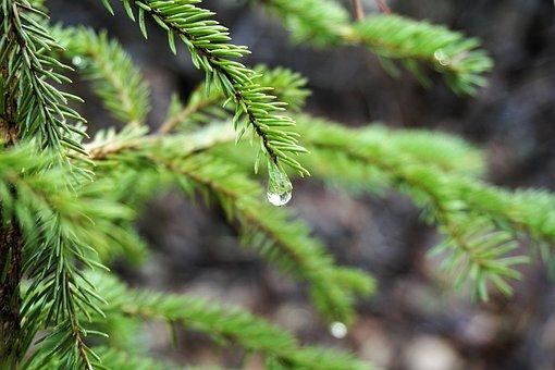 Relaxing, Rain Drop, Water, Drops, Leaf, Nature, Relax