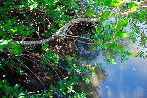 Leaves, Nature, Water, Tree, Leaf, Environment, Natural