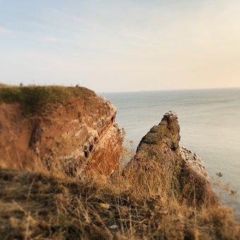 Helgoland, North Sea, Northern Gannet, Lummenfelsen