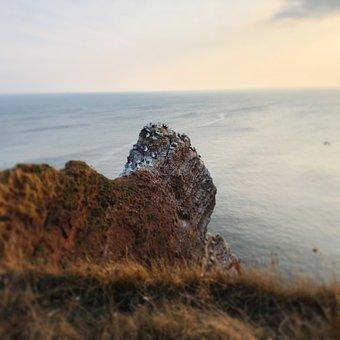 Helgoland, North Sea, Sea Island, Northern Gannet