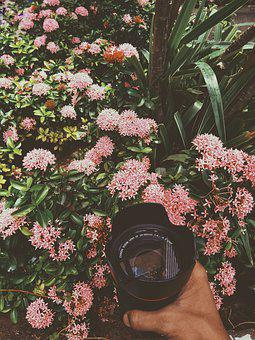 Blossom, Peace, Nature, Pink, Natural, Camera, Lens