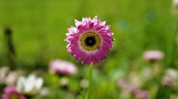 Flower, Sunny, Vegetable, Petals, Bright, Garden