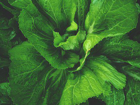 Food, Fresh, Organic, Tomato, Vegetable, Healthy, Diet