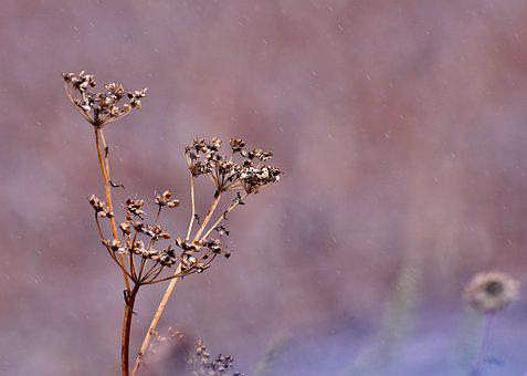 Twigs, Seeds, Overblown, Flora, Nature, Bokeh, Brown