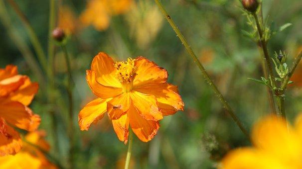 Orange, Flower, Vegetable, Petals, Bloom, Beauty