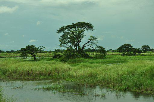 Myanmar, Farm, Rice, Agriculture, Countryside