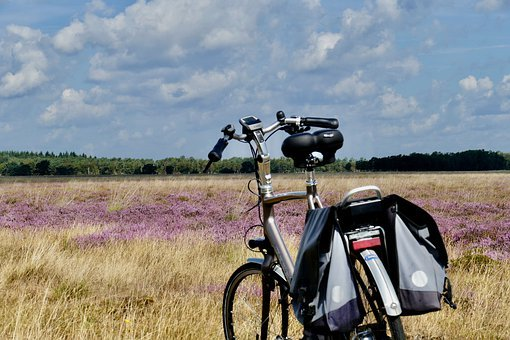 Heide, Bicycle, Purple, Summer, Cycling, Bicycle Tour