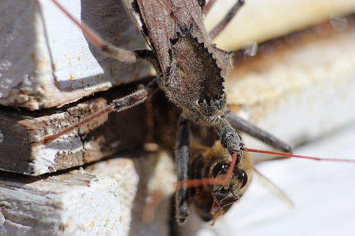 Bug, Predator, Insect, Nature, Biology, Wildlife