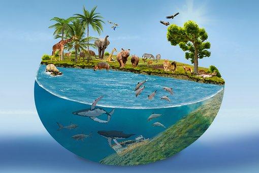 Nature, Composing, Animals, Sea, Ball, Vacations, Ocean