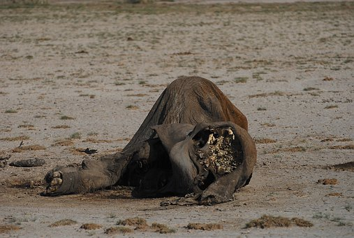 Elephant, Dead, Skeleton, Climate Change, Drought