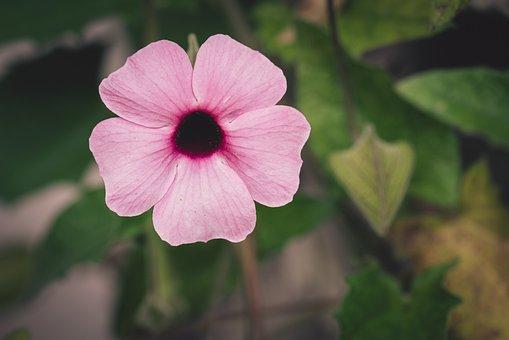 Blossom, Bloom, Pink, Flower, Garden, Flower Garden