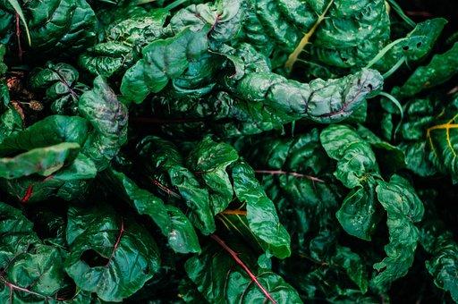Kale, Green, Food, Healthy, Fresh, Vegetables, Organic