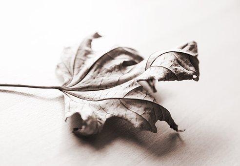Autumn, Maple, Leaf, October, Season, Mood, Nature