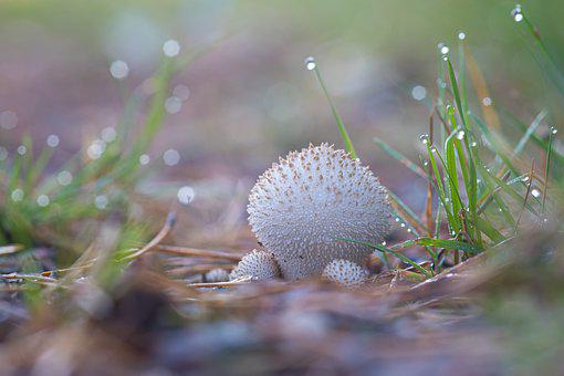 Mushroom, Autumn, Forest, Nature, Mushrooms, Green