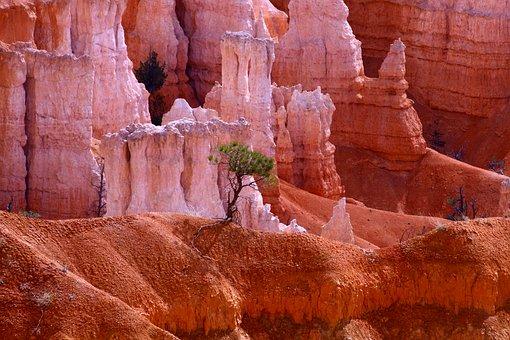 Bryce Canyon, Usa, Utah, National Park, Rock, Nature