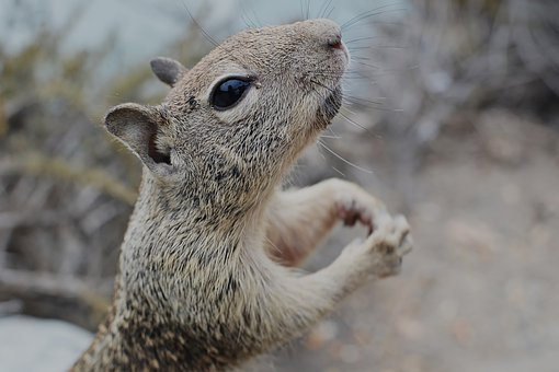 Squirrel, Nature, Animal, Furry, Small, Wildlife, Sweet