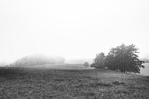 Fog, Tree, Forest, Black And White, Nature, Landscape