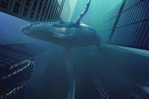 Whale, Building, Underwater, Brisbane, Cdc, Atlanta