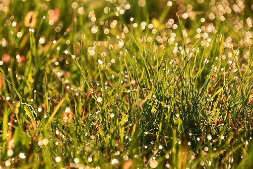 Grass, Dew, In The Morning, Meadow, Autumn, Green