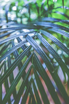 Leaves, Background, Leaf, Nature, Plant, Green, Texture