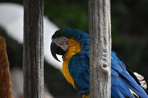 Bird, Zoo, Blue, Sleep, Parakeet
