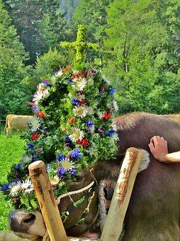 Viehscheid, Beef, Tradition, Flowers, Headdress, Cattle
