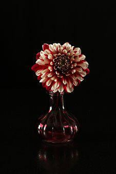 Dahlia, Dahlia In A Vase, Flower, Flower In A Vase